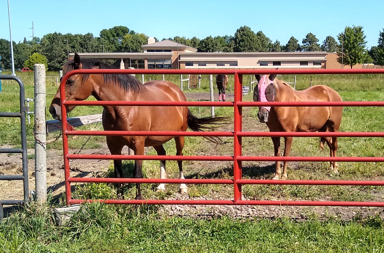 Horses outside in a fenced pasture.